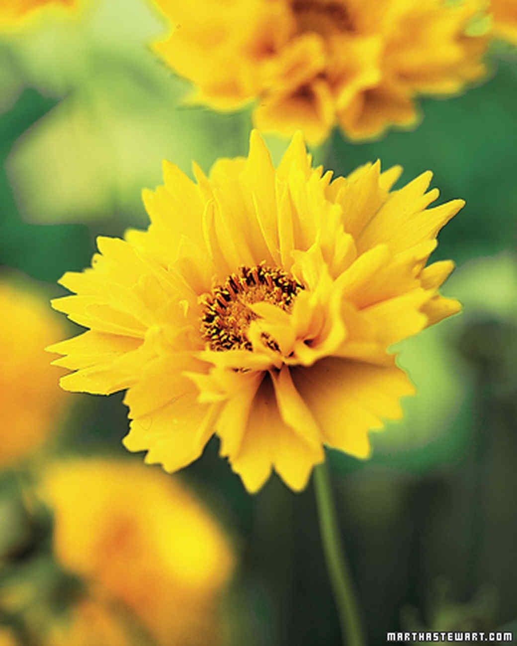 ft_flowergarden13.jpg