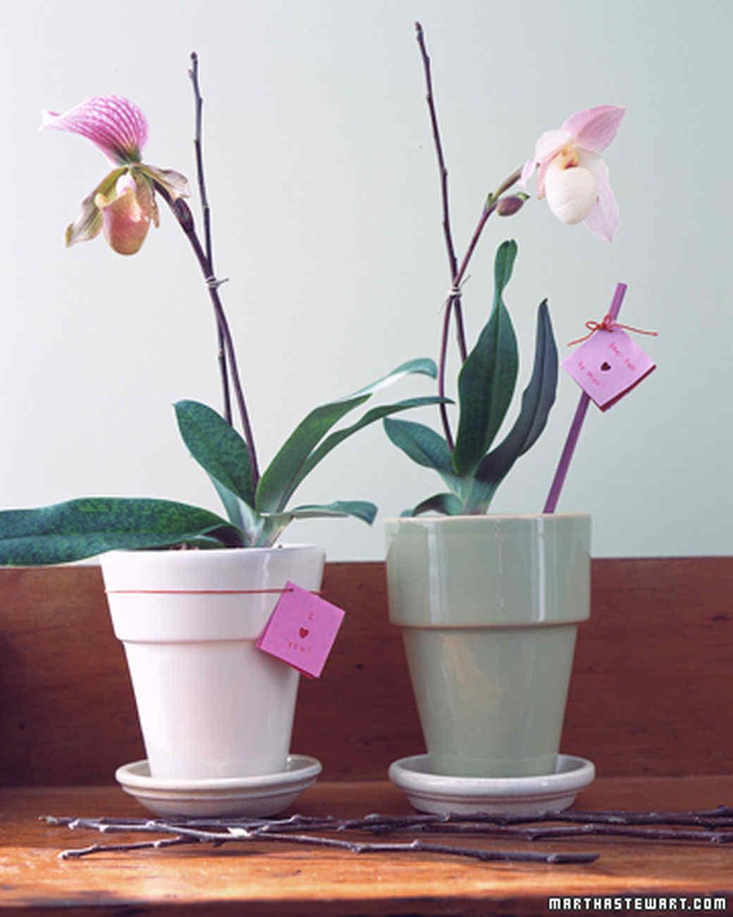 gt02febmsl_orchid.jpg
