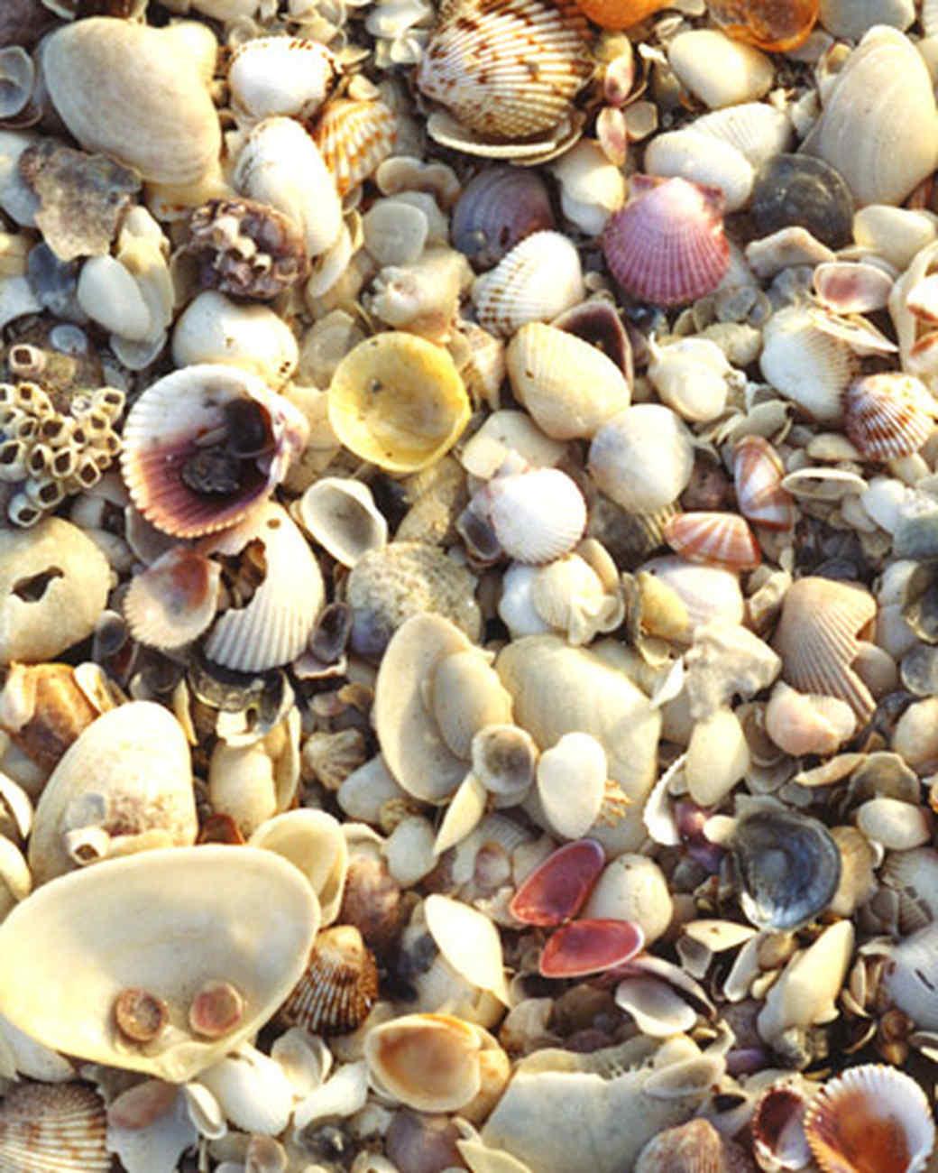 Shelling on sanibel island martha stewart shelling sweet spot nvjuhfo Gallery