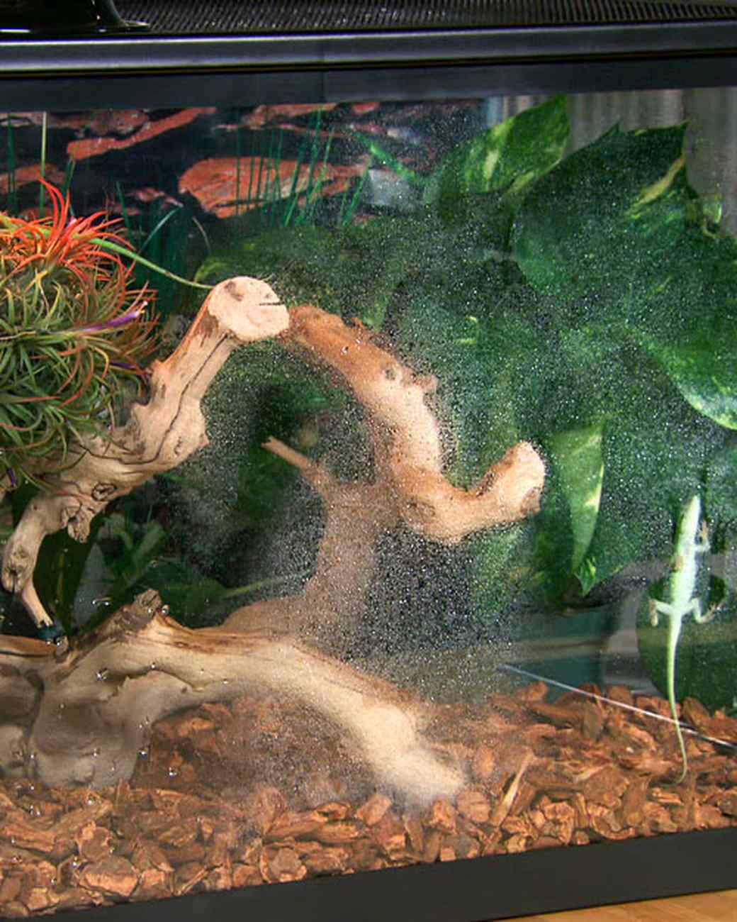 Lizard Terrarium How To Martha Stewart