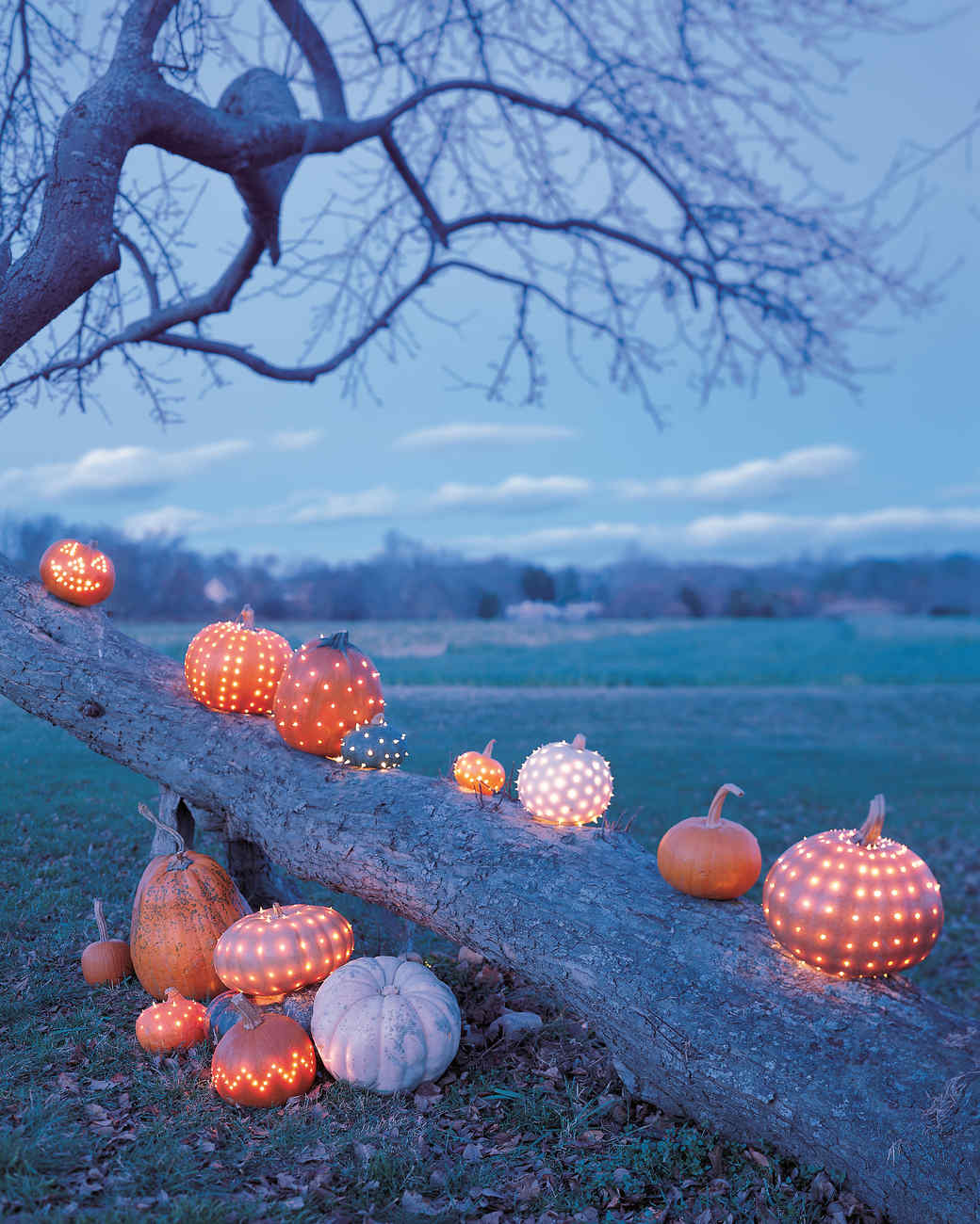 Drilling Pumpkins Martha Stewart