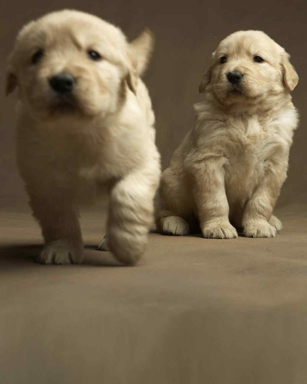 Golden Rule Dog Training