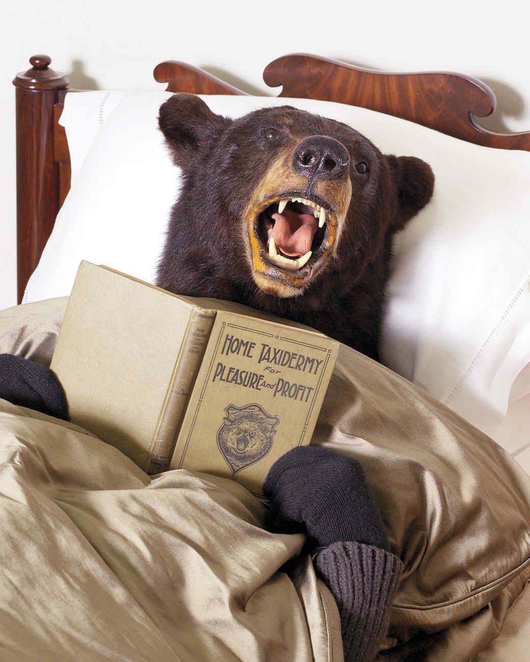 bear-1011mld107873.jpg