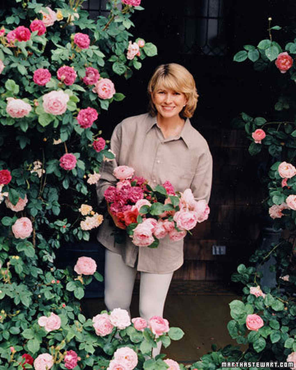 The Secrets Of Martha S Rose Garden Martha Stewart