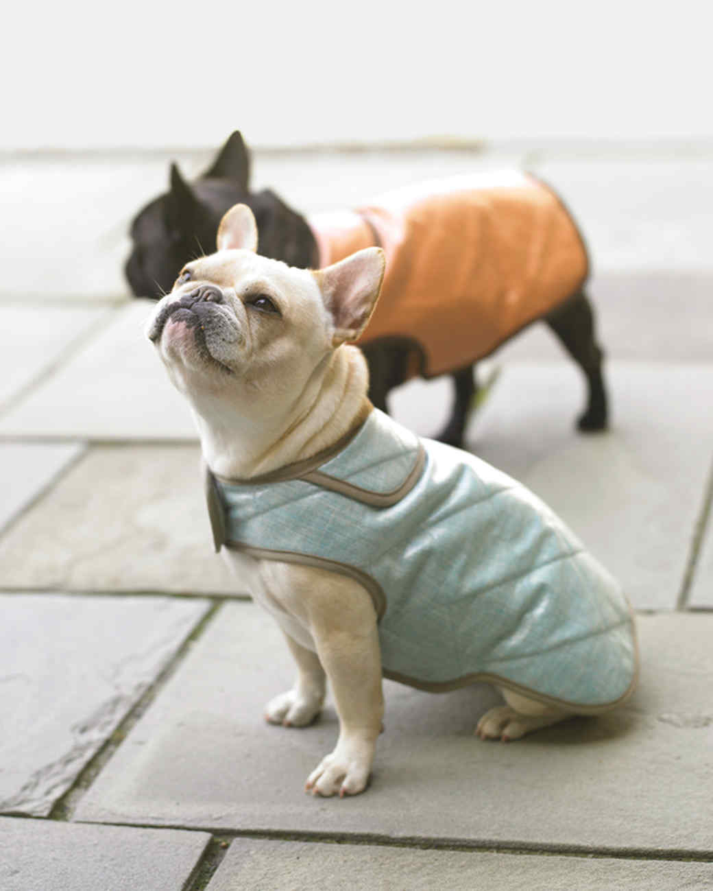 Water-Resistant Dog Coats | Martha Stewart