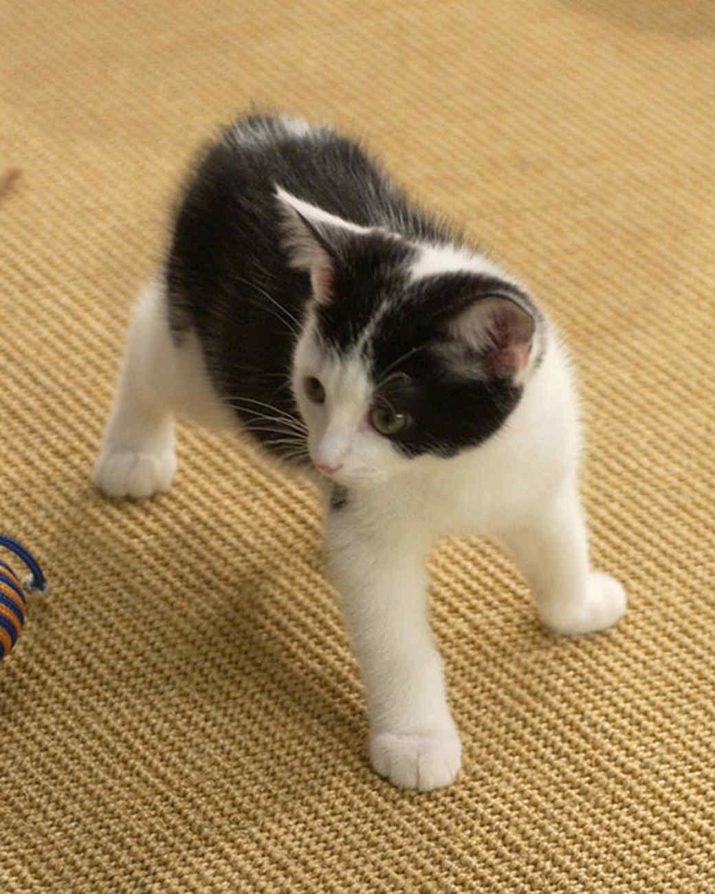 pe_cats_tvs9629_08.jpg