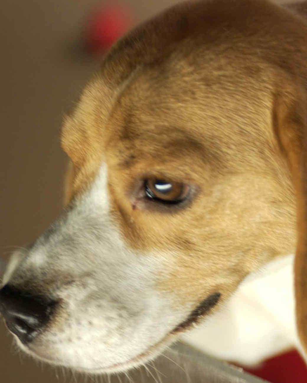 pe_dogs_tvs9677_10.jpg