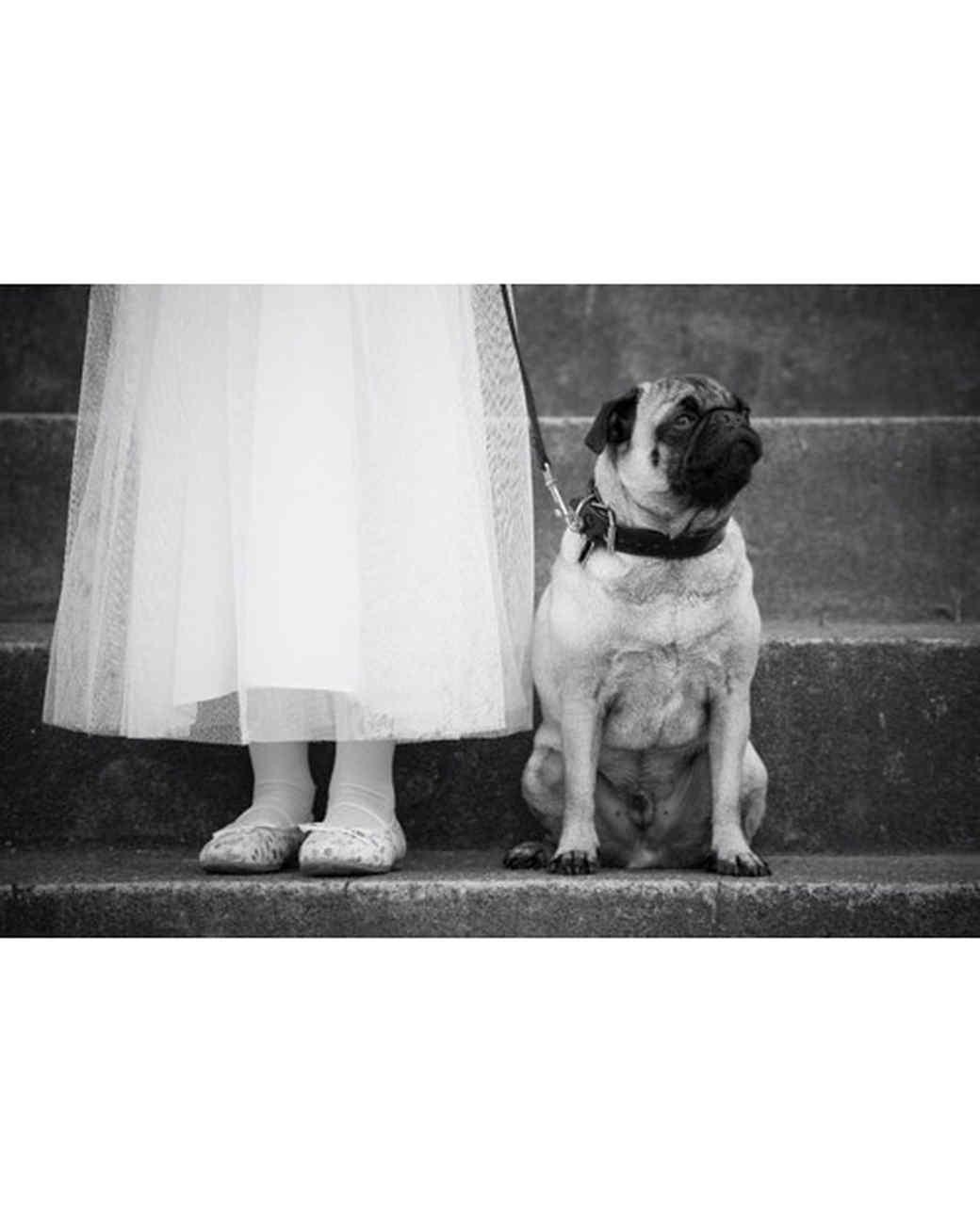 pets_wedding_90657.jpg
