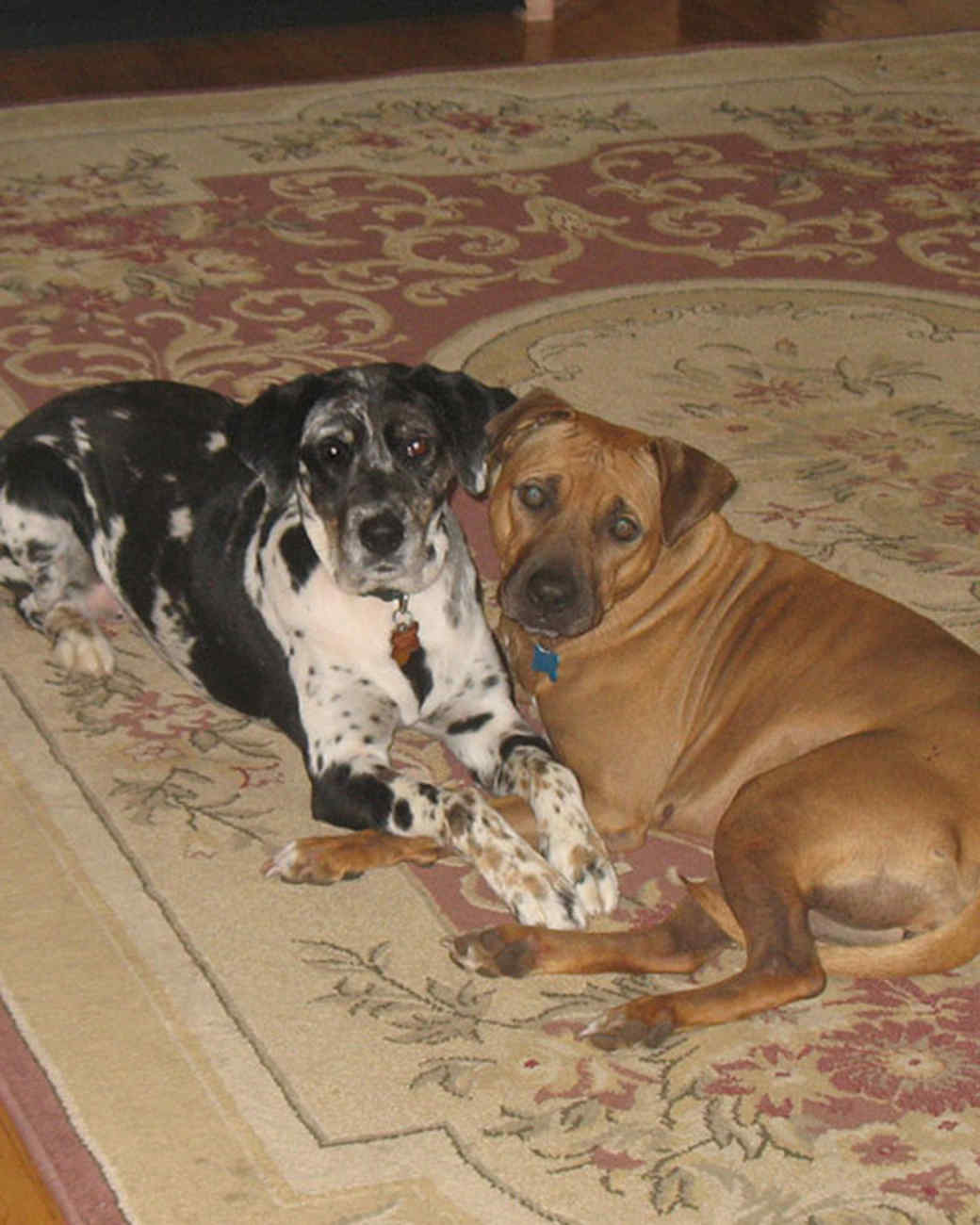 r_pets_kims_dogs_2.jpg