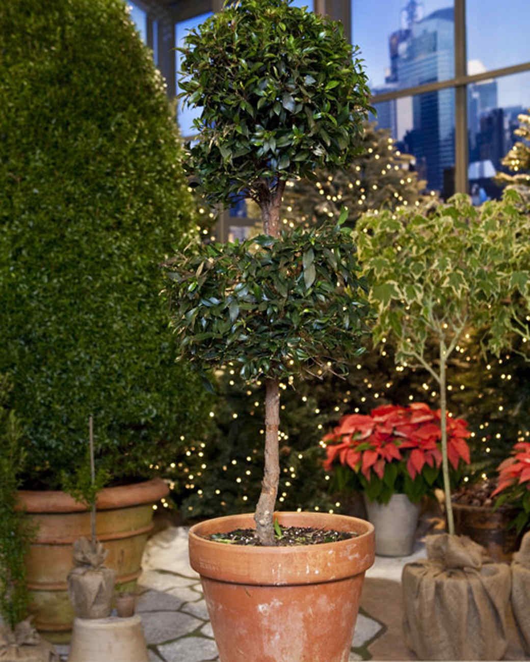 Instant Topiaries with David Haskell