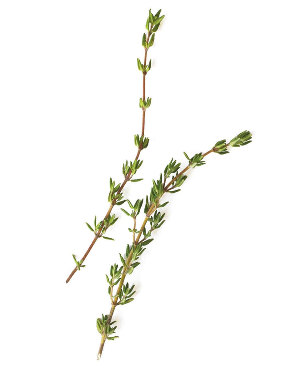 Herb Basics | Martha S...