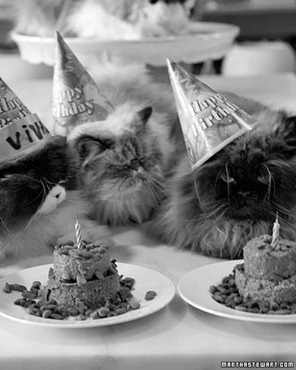 Happy Birthday Tumblr Cat