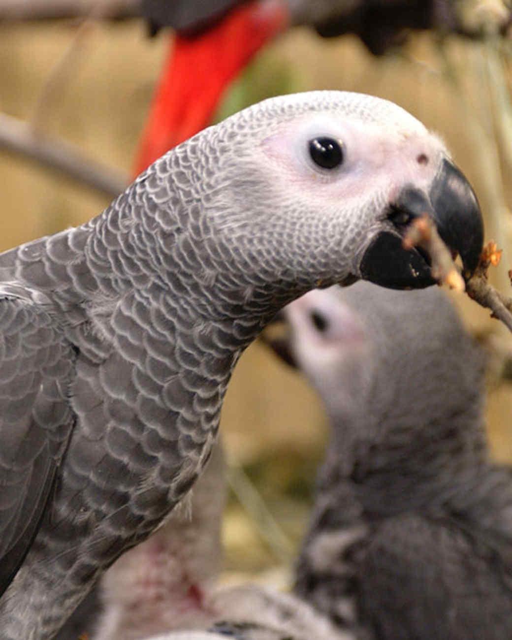 pe_birds_tvs9674_05.jpg