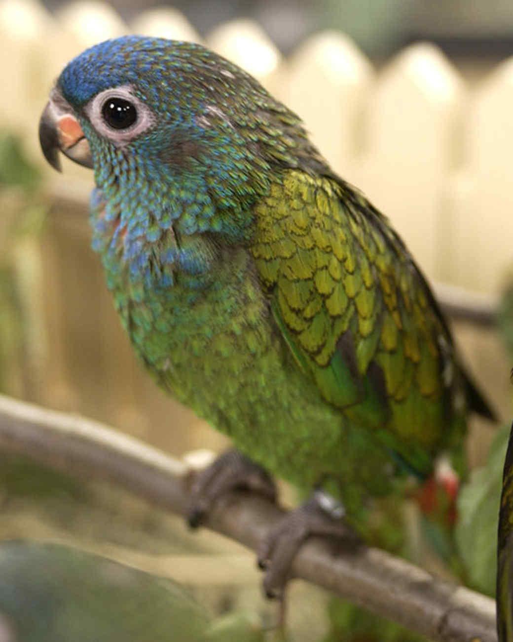 pe_birds_tvs9675_01.jpg