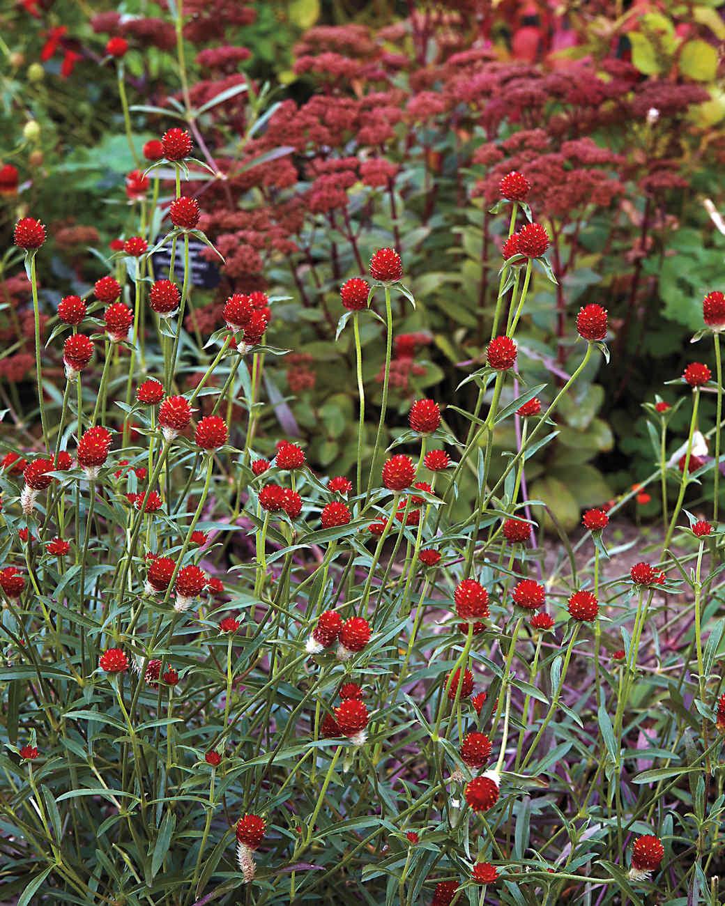 redflowers-md110341.jpg