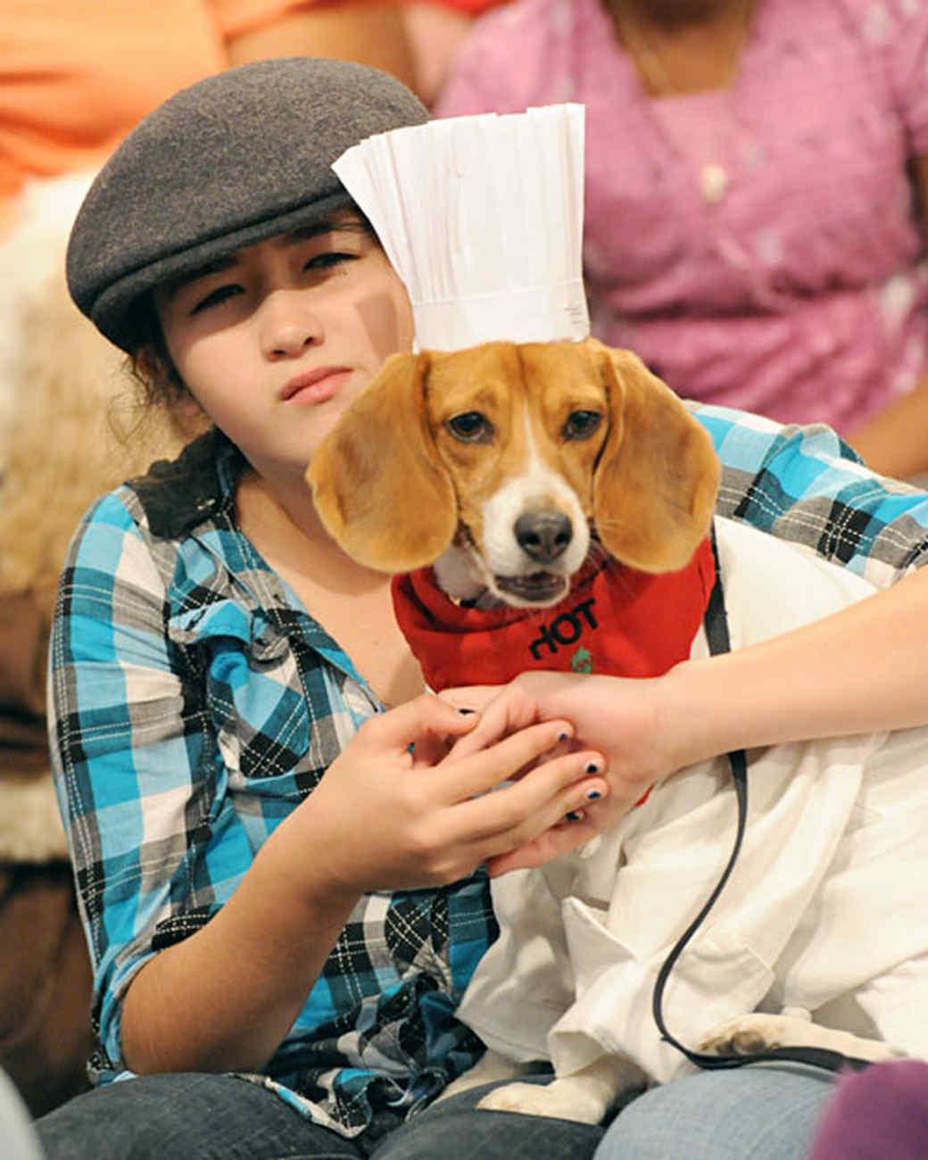 6034_102810_chef_dog.jpg