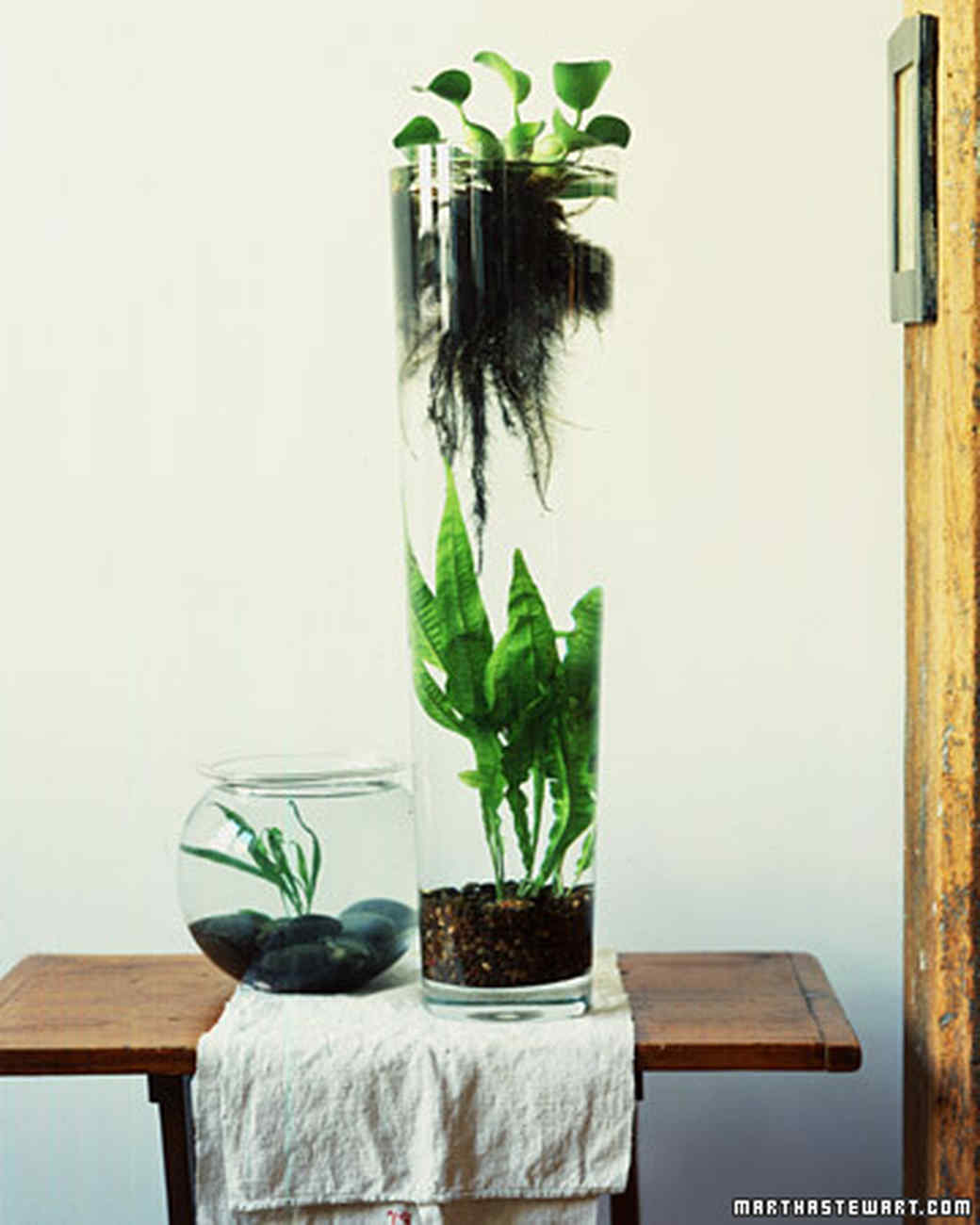 50 Creative Ideas To Display Your Air Plants In A Most: 11 Creative Container Garden Ideas