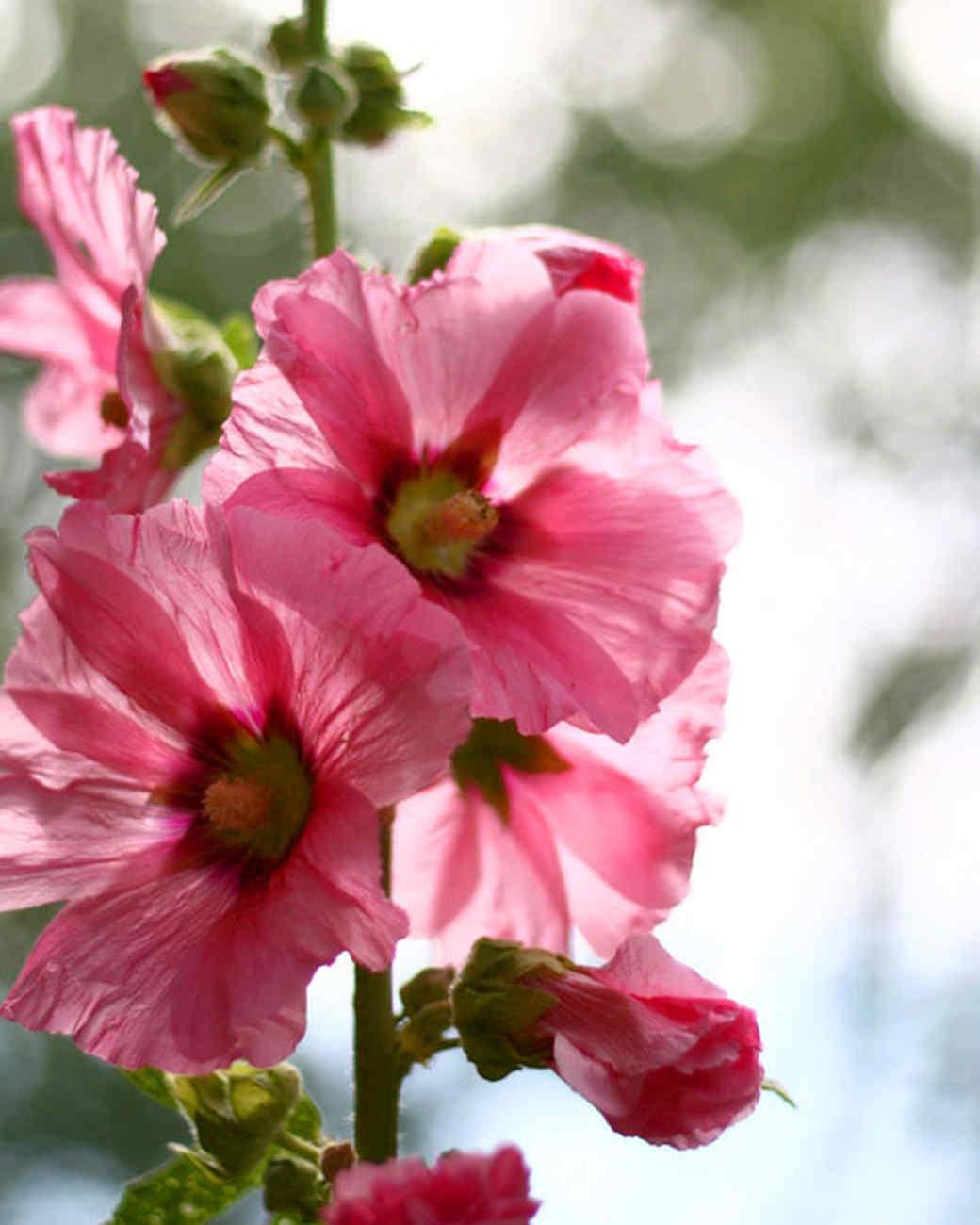 garden_contest_49101.jpg