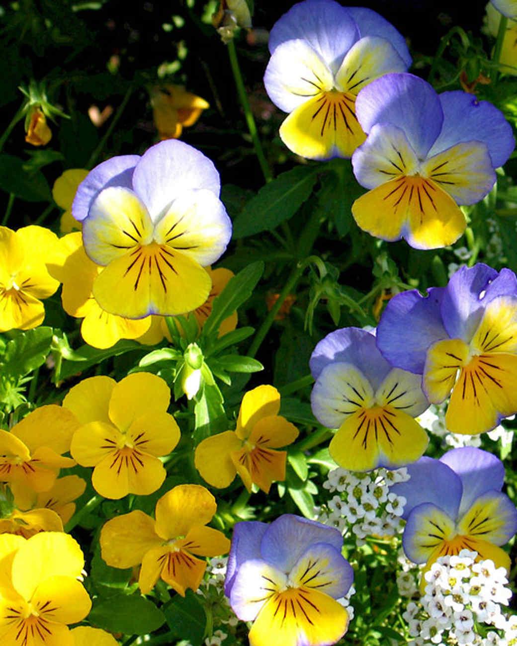 garden_contest_49496.jpg