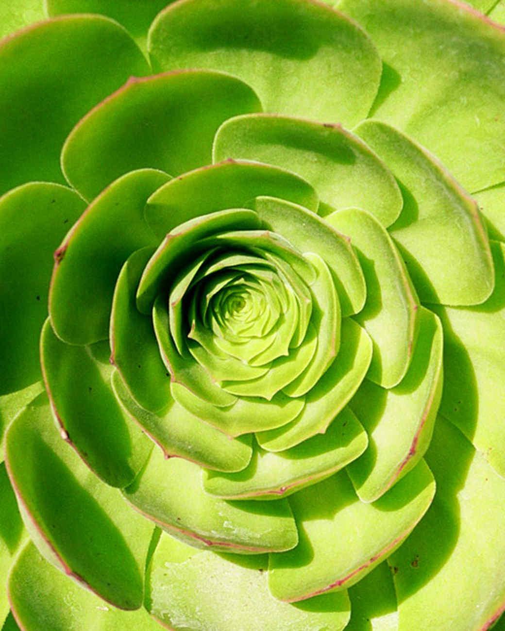 garden_contest_50506.jpg