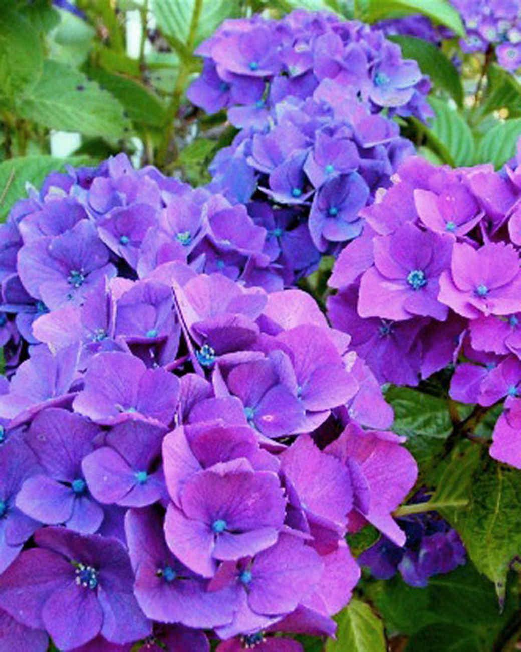 garden_contest_50716.jpg