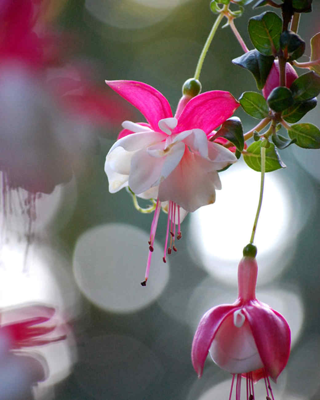 garden_contest_52269.jpg