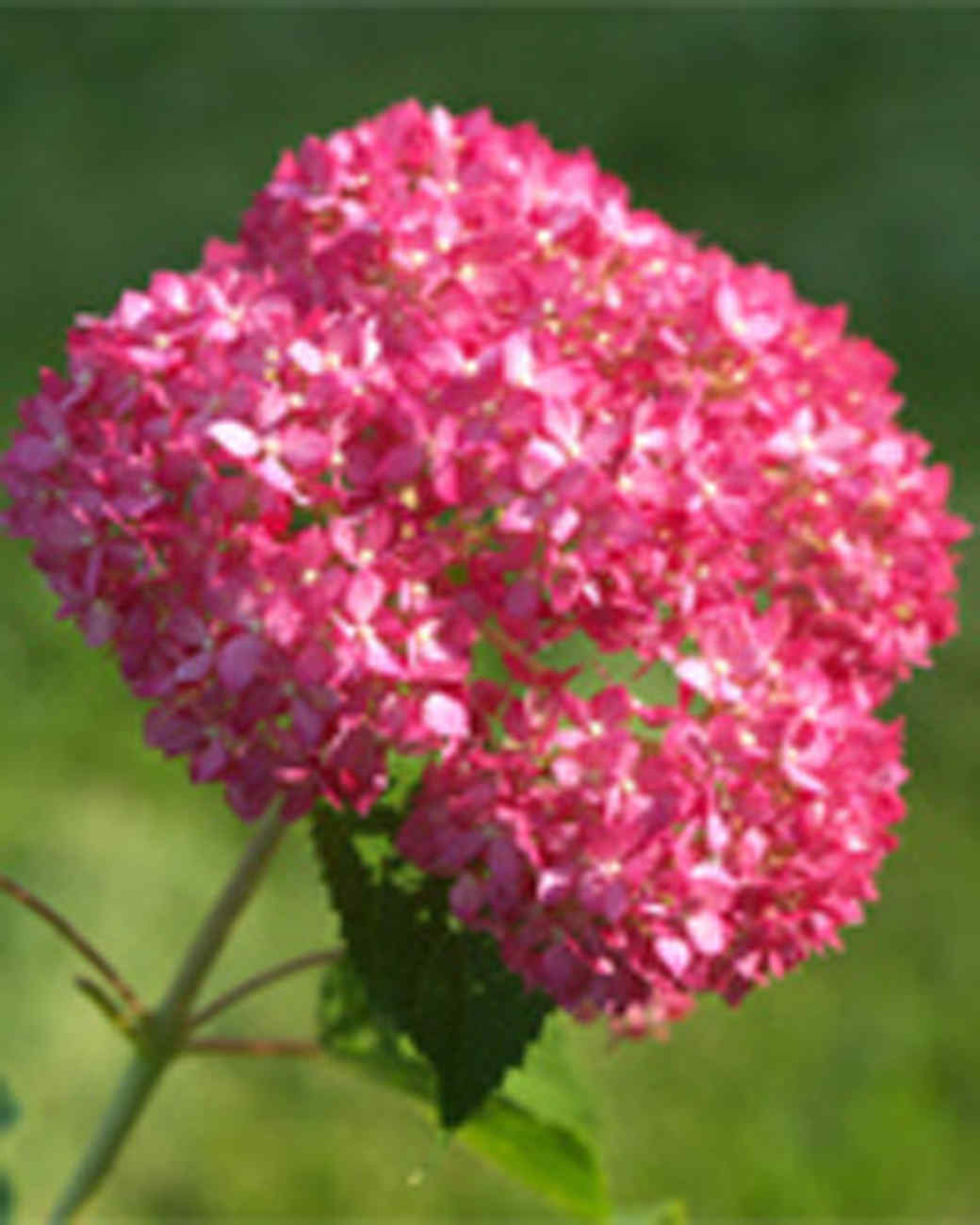 garden_contest_75620.jpg
