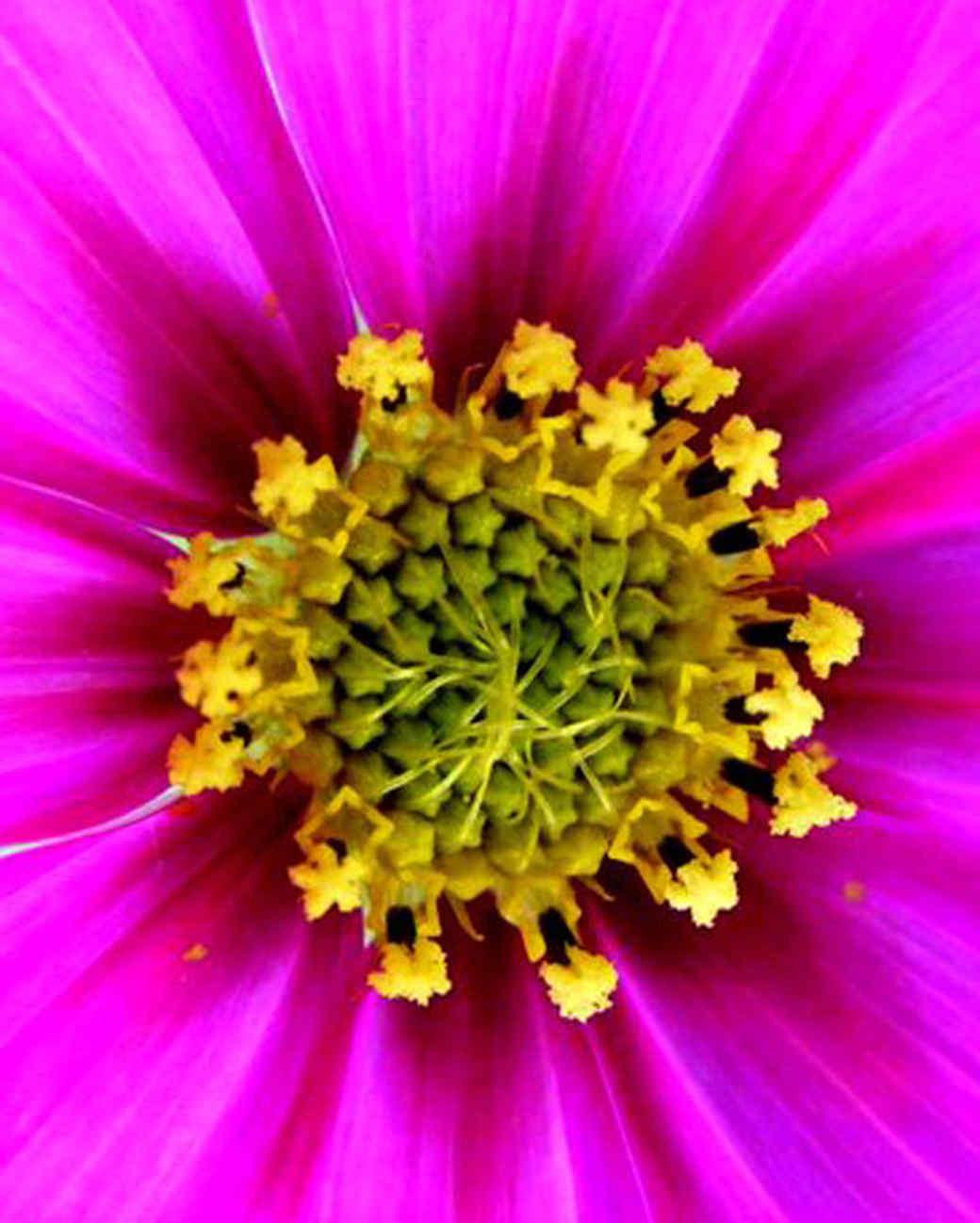 garden_contest_77416.jpg