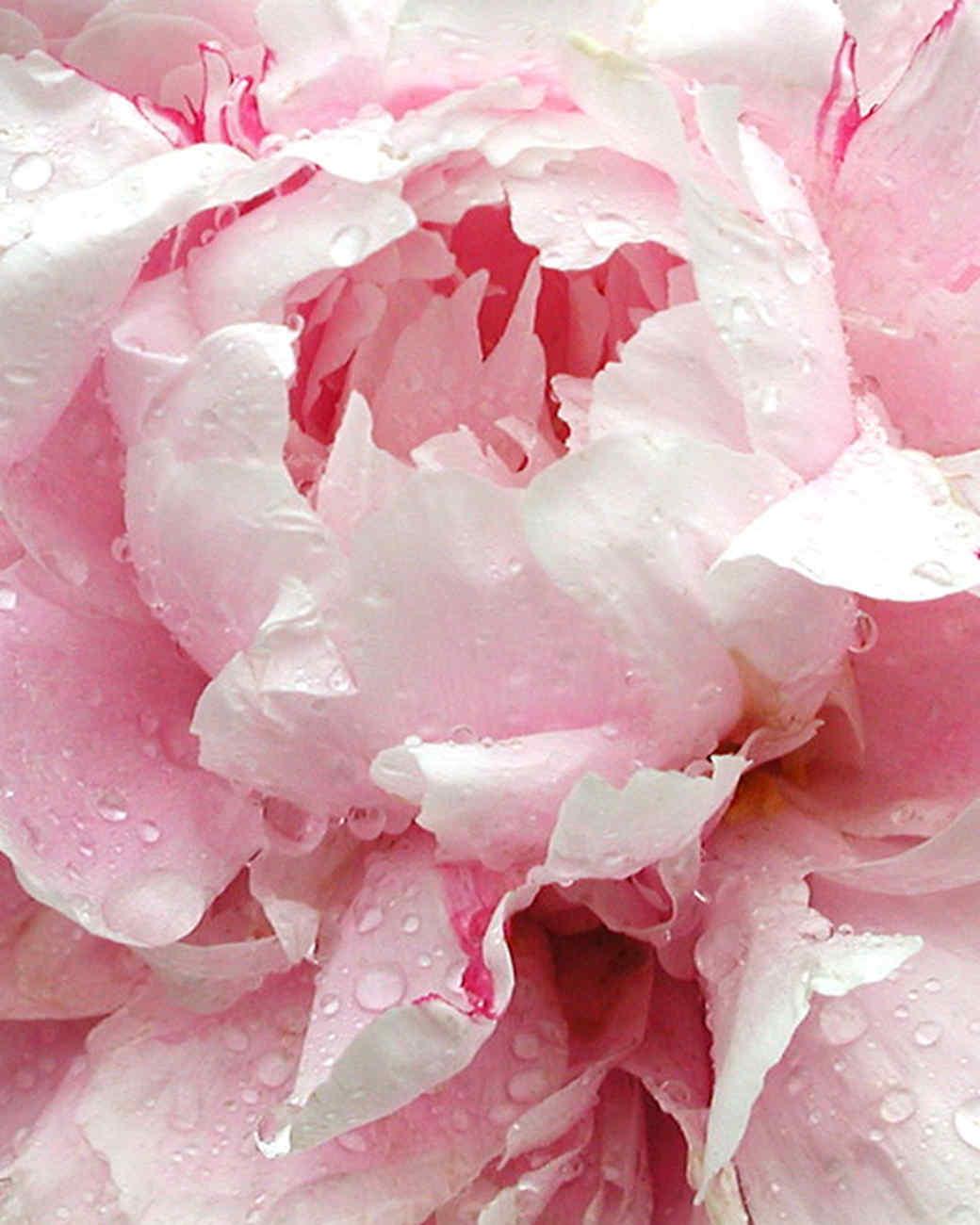 garden_contest_78077.jpg
