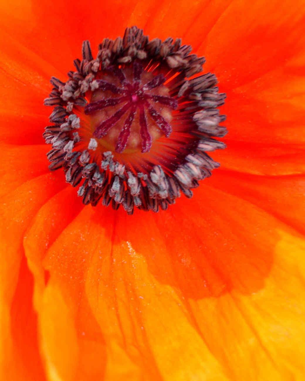 garden_contest_78978.jpg