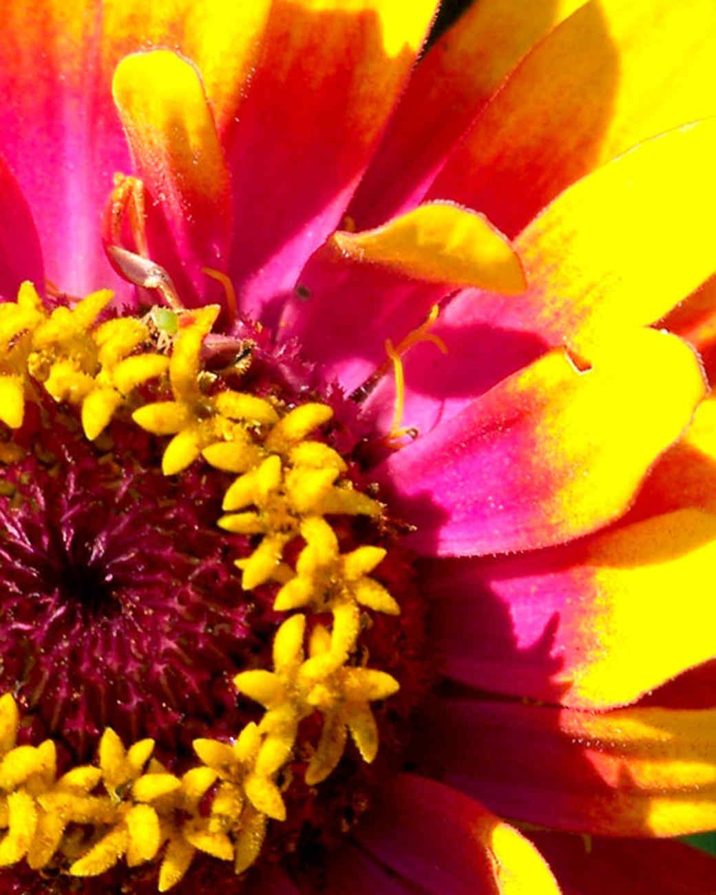 garden_contest_79621.jpg