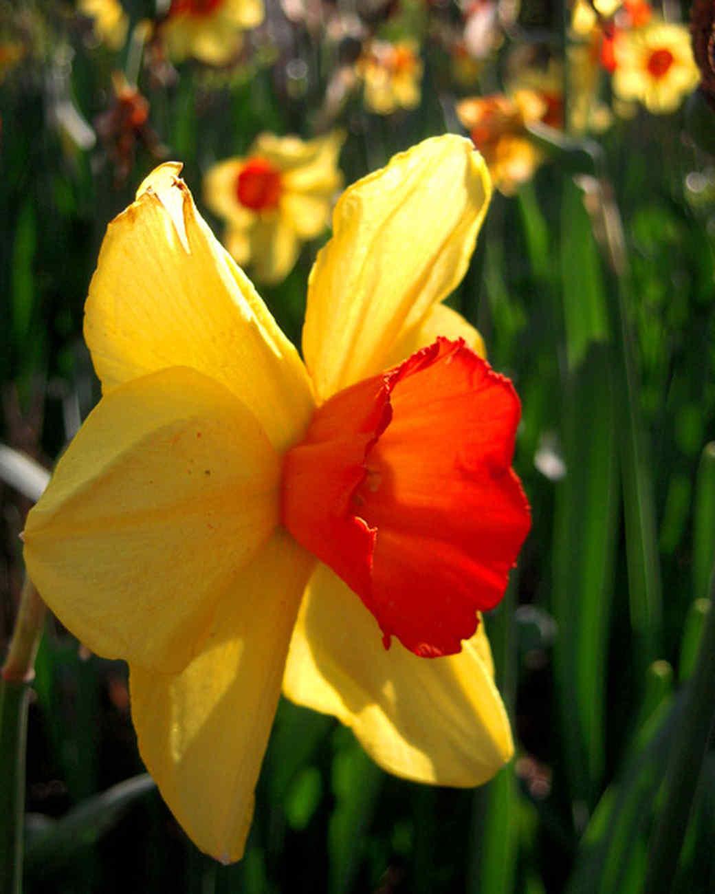 garden_contest_83819.jpg