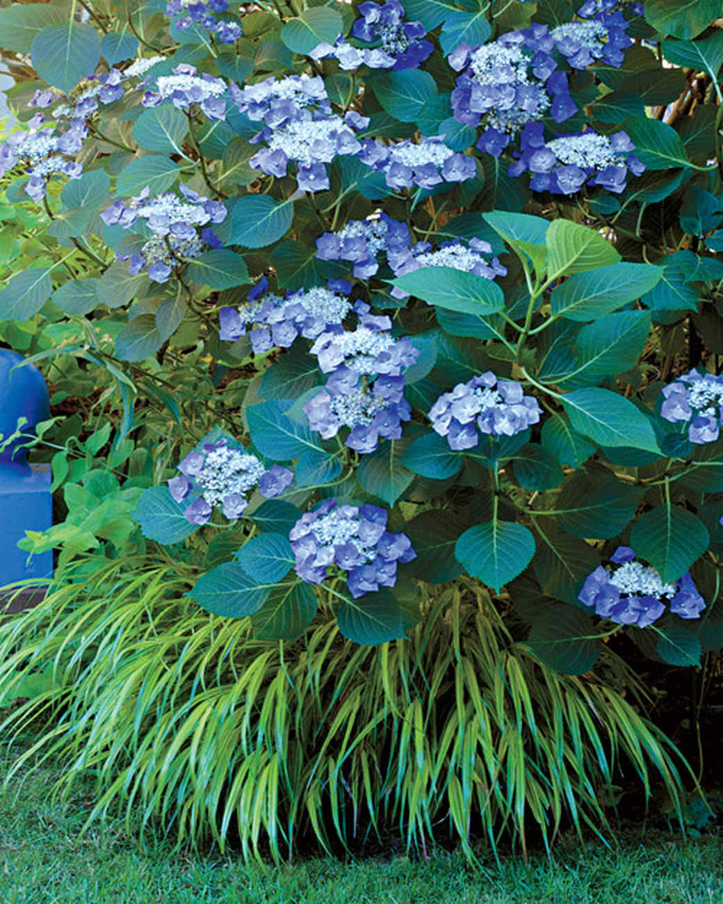 five ways to use color in your garden martha stewart