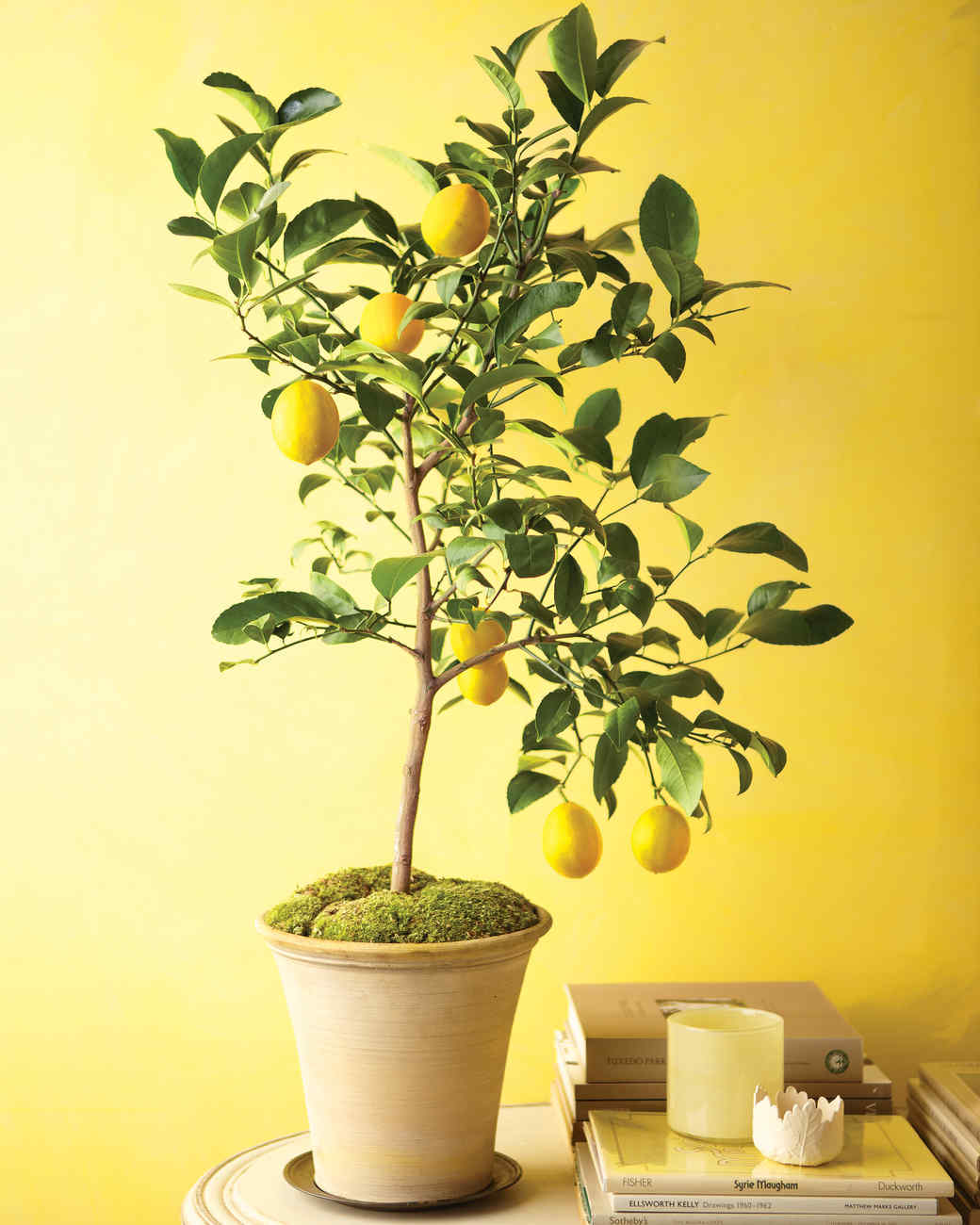 How To Grow Citrus Indoors Video Martha Stewart