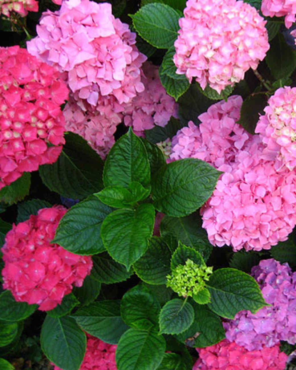 ori30034_your_garden.jpg