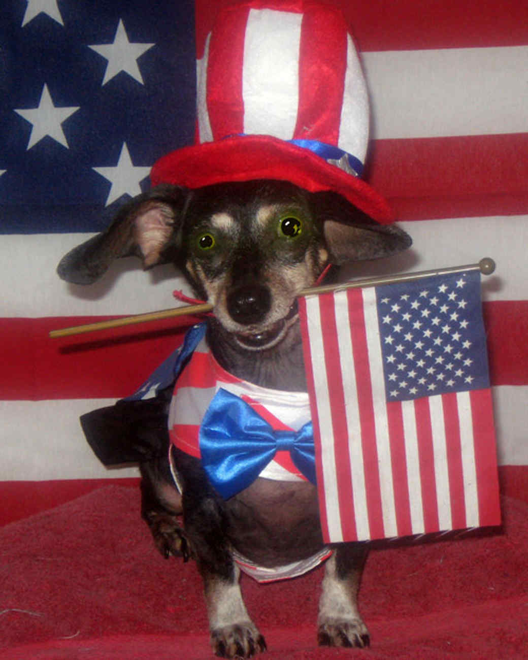 Patriotic Pet Contest Martha Stewart