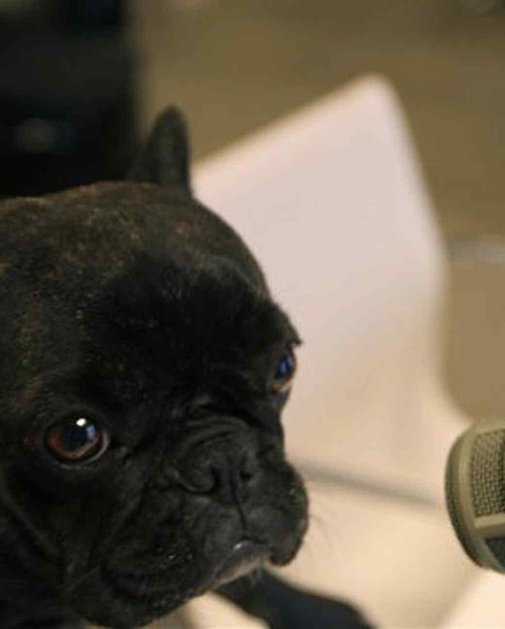 pets_best_wag_radio1.jpg