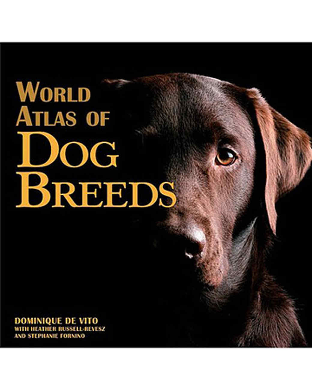 pets_dogs_coverimage.jpg