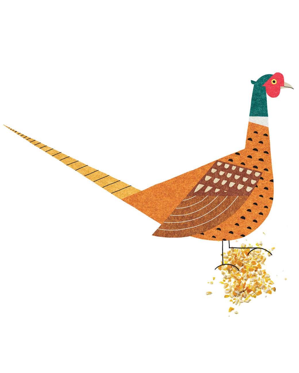 pheasant-02-mi110385.jpg