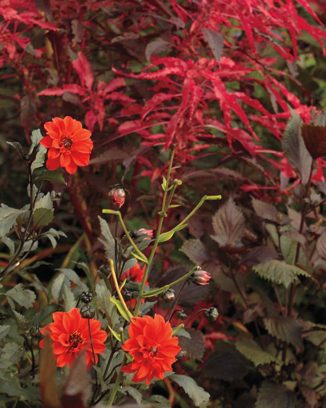 redflowers4-md110341.jpg