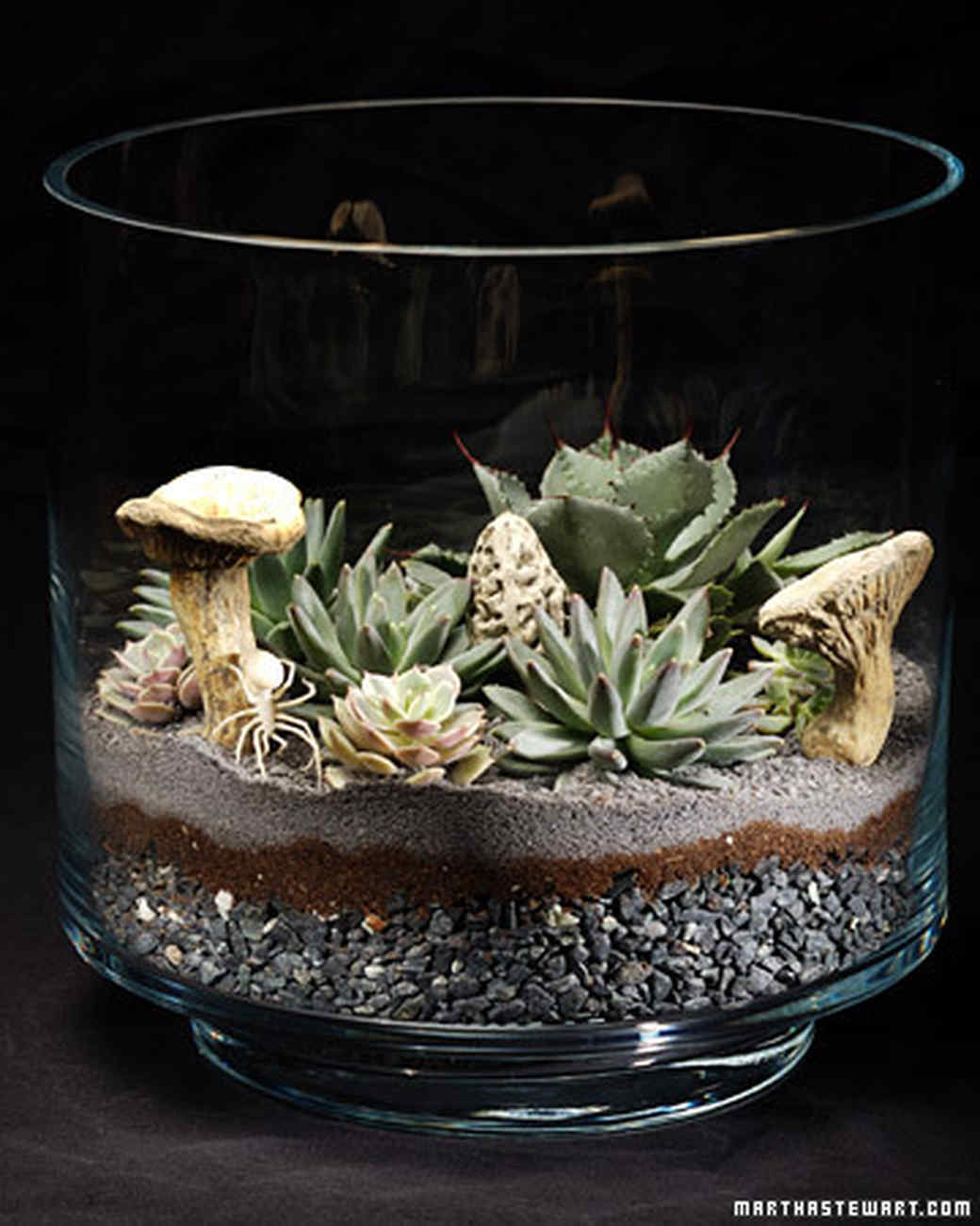 Succulents Terrariums & Video | Martha Stewart