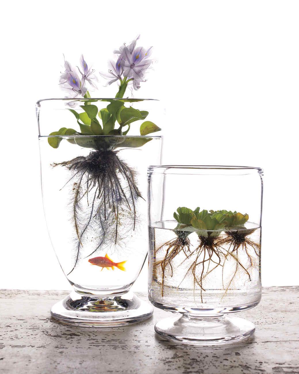 Genial Aquatic Plant
