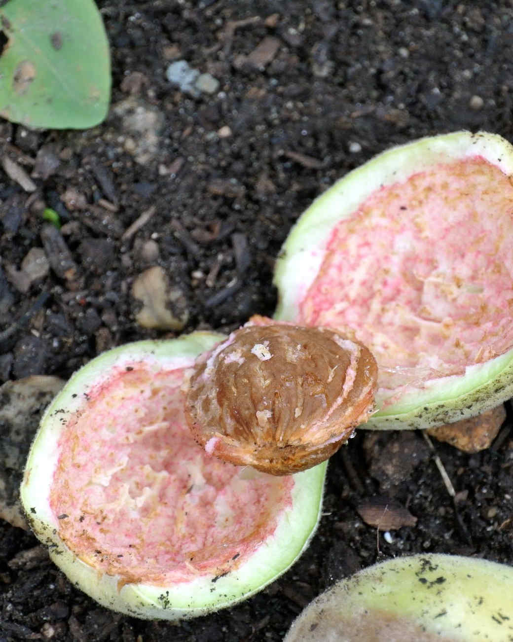 harvesting-almonds-13.jpg