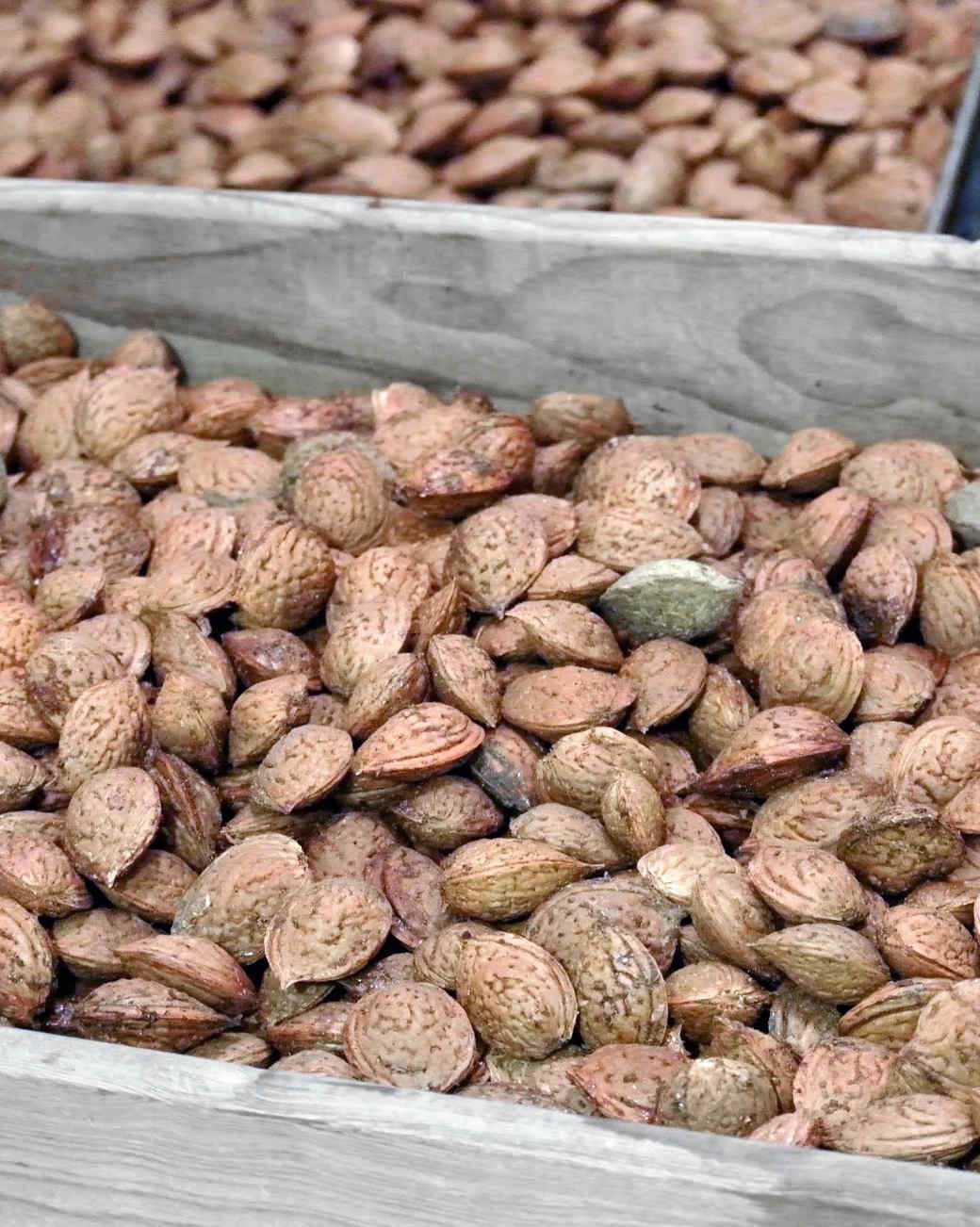 harvesting-almonds-21.jpg