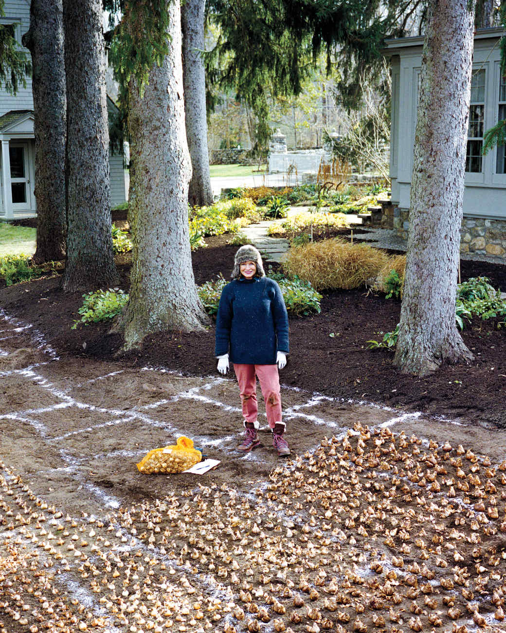 When how to plant daffodil bulbs - Plot Development