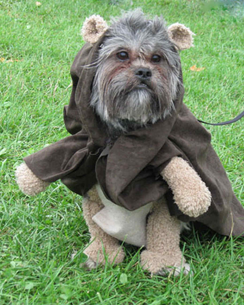 Halloween pet contest 2008 martha stewart solutioingenieria Image collections