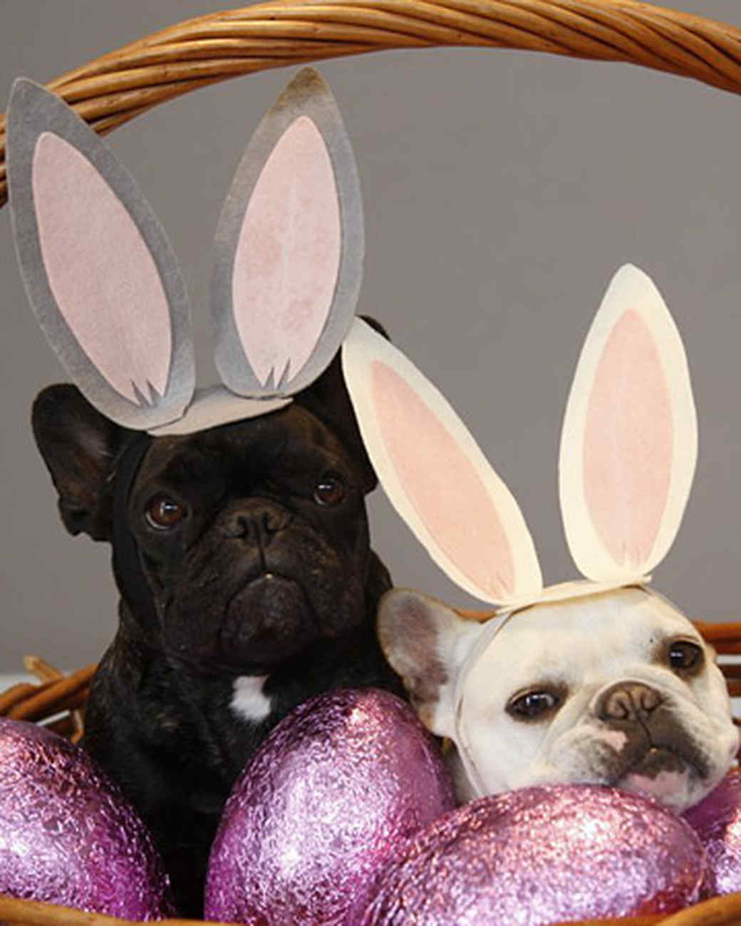 pets_best_wag_easter2.jpg