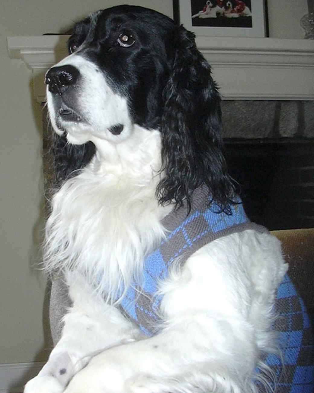 r_pets_jocelyn_dogs_2.jpg