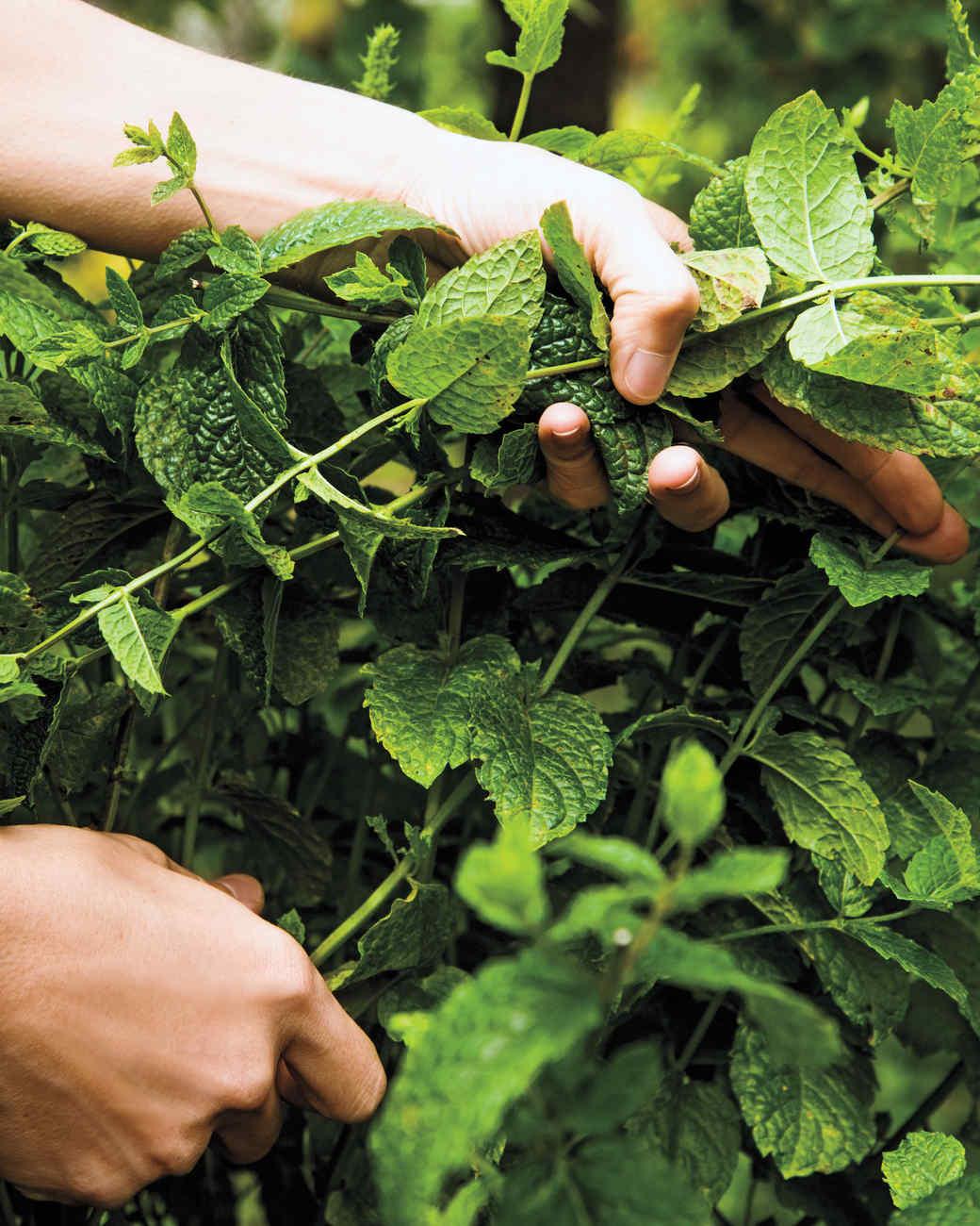 herb-garden-11-d111488.jpg