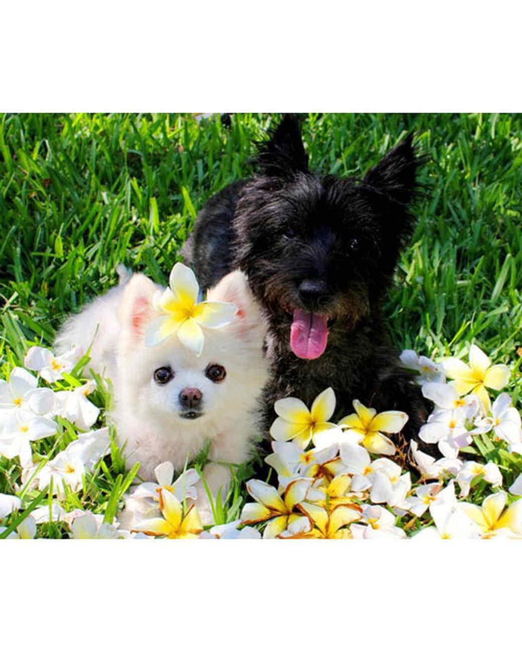 pets-13549553-26478336.jpg